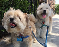 Cuties on Dog Walk – Dog Walkers in Brooklyn | QC Dog Walking Services