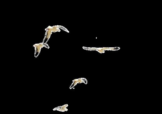 dsc_0085_flock_of_beach_birds___psd_file