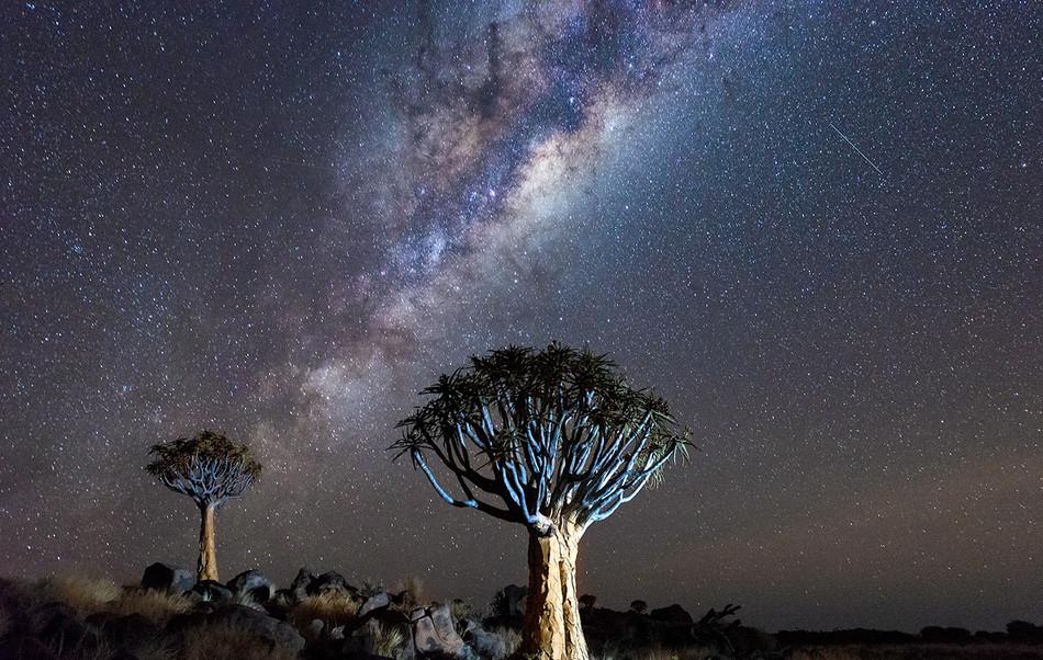 quiver tree (2).jpg