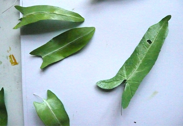 bettina bick textilmuseum pflanzenimitation modellbau exponat