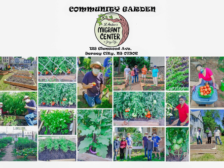 Our community garden thrives!