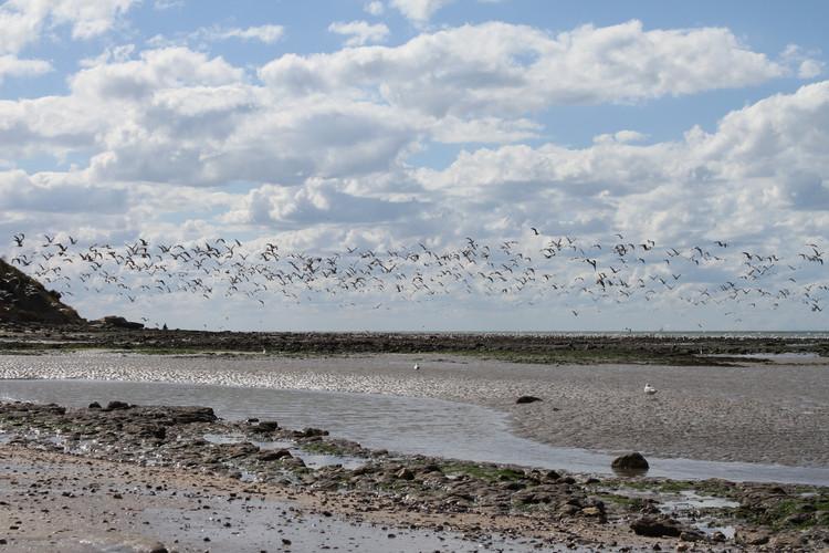 plage et oiseaux.JPG