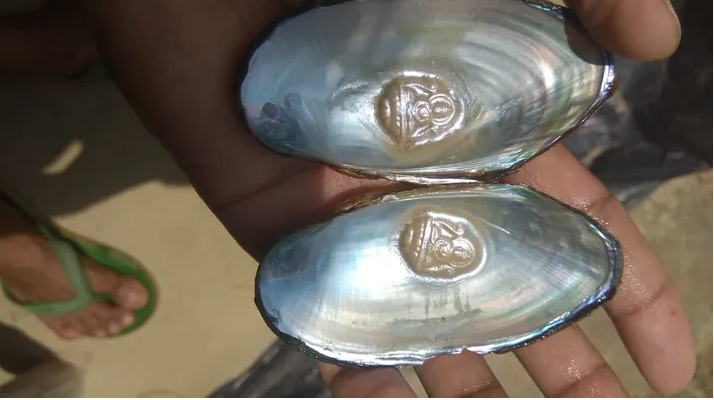 Pearl earnings: why mussel farming is booming amid lockdown in India B-AIM Pick Selects