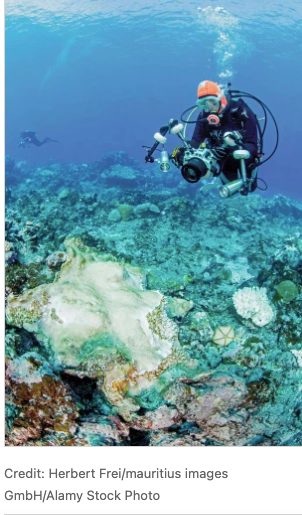 Speeding up coral reef conservation with AI-aided automated image analysis- B-AIM PICK SELECTS