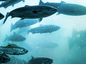 New technologies are transforming the way we farm and fish- B-AIM PICK SELECTS