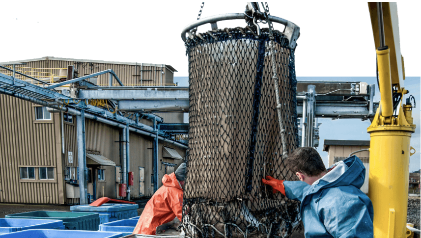 The role of big data and AI in the seafood industry- B-AIM  PICK SELECTS