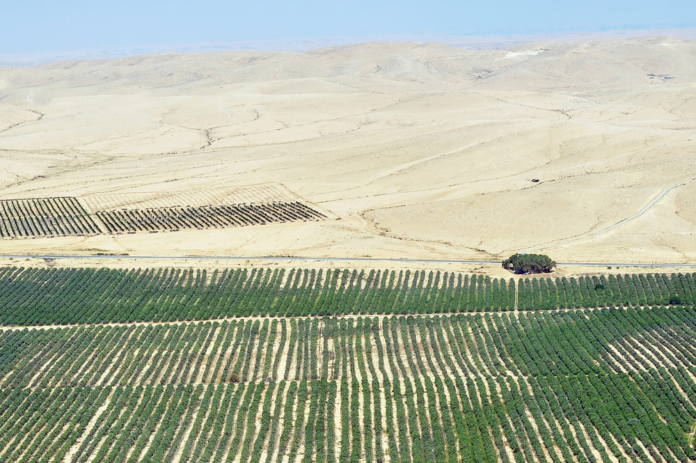 Picture of a farm in the Negev desert