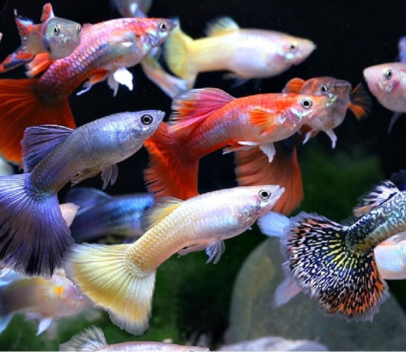 Colors company ornamental fishes