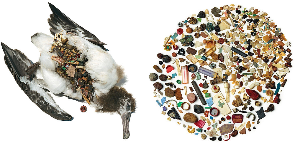 Plastic Pollutin