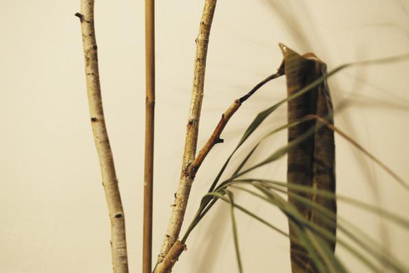 Hovoriace prsty stromov_DOT.Contemporary