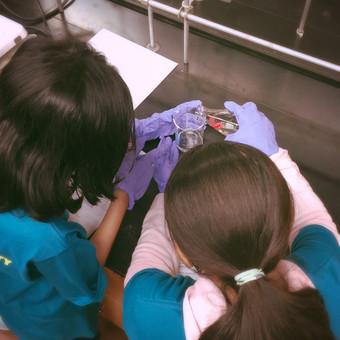GIRLS' SCIENCE DAY