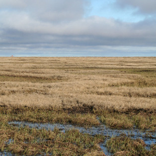PHOTO OF THE DAY: THE ARCTIC TUNDRA