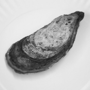 THE COOL, IMPASSIVE OYSTER