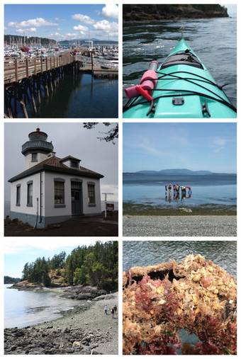 PHOTOS OF THE SUMMER: FRIDAY HARBOR