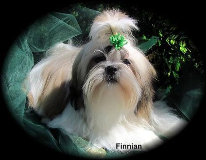Finnian.jpg