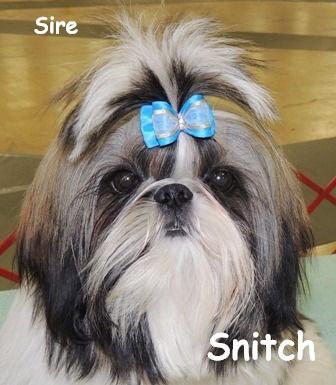 snitch%25207-23%2520aaaaa%2520best_edite