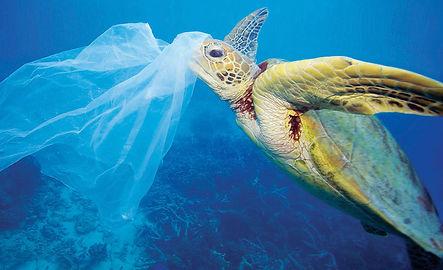 8-plastic-bag-each-day-ft-1170x650.jpg