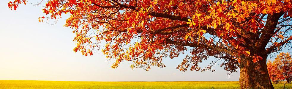 Golden Charter Tree