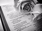 Bible and Rose BW