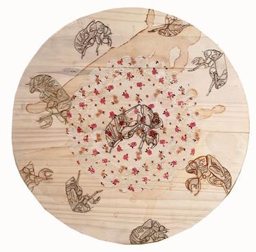 """""""Cicadas in the Round"""""""