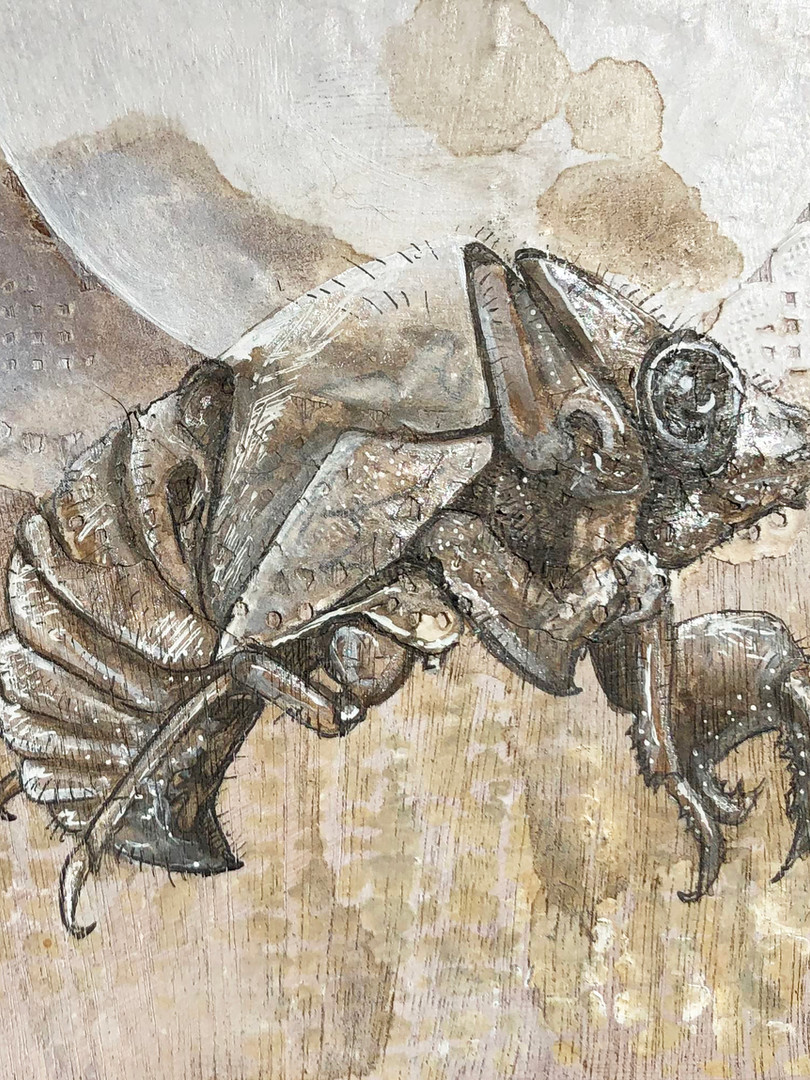 cicadashell.jpg