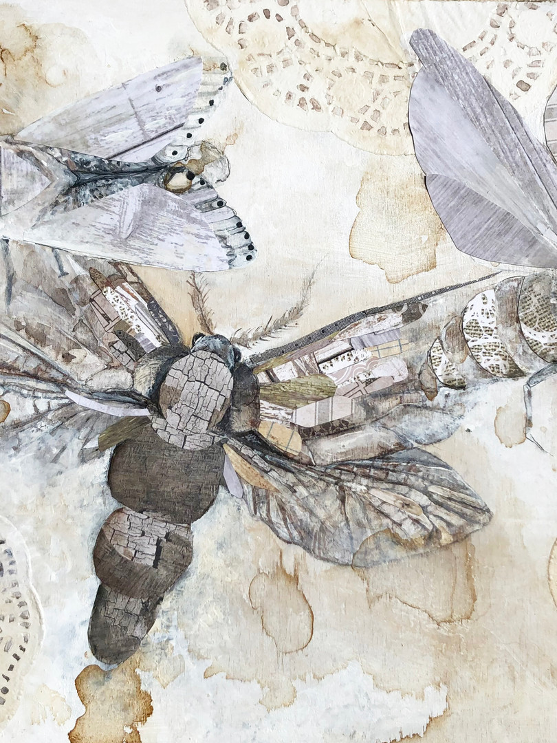 moths.jpg