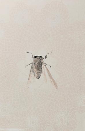 """""""Cicada II"""""""