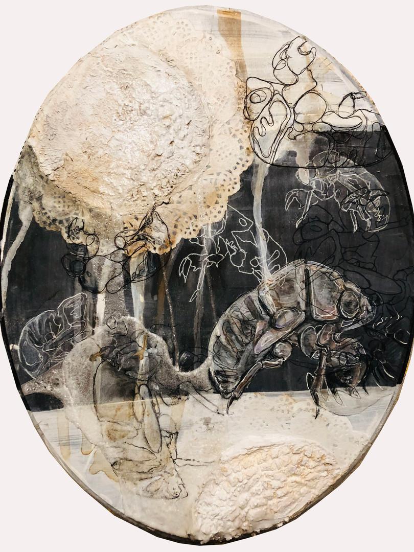 11. Caitlin Gill. Cicada..jpg