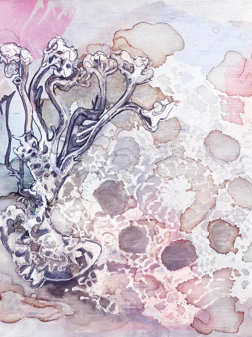 fungus1.jpg