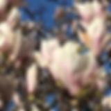 blomstmaj.133301.jpg