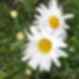 blomsterjuni19.jpg