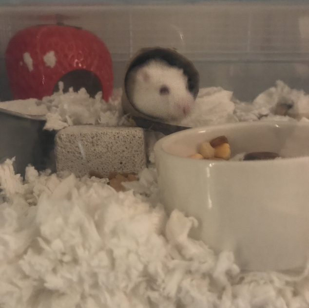 Meet Archie, albino and three months old.