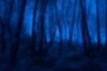 Spooky foggy mountain forest at night.jp