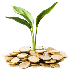 Plant sprounting from coins