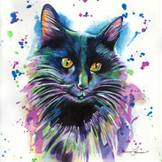 Black Cat 8x10 Watercolor on paper