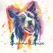 Boarder Collie 8x10 Watercolor on paper
