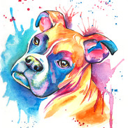 Boxer 8x10 Watercolor on paper