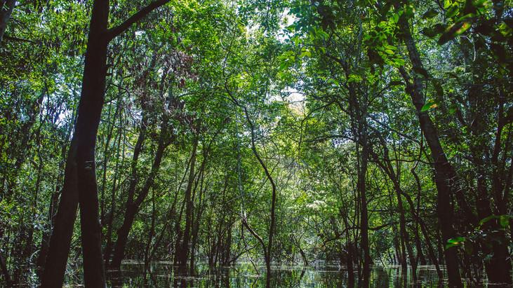Rede SDSN-Amazonia abre vaga para contratação de gestor da Plataforma de Soluções