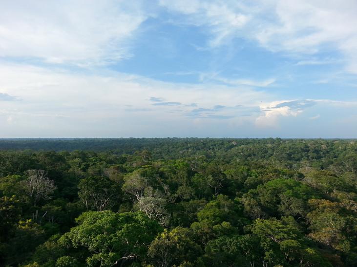 Florestas podem salvar o planeta removendo carbono da atmosfera