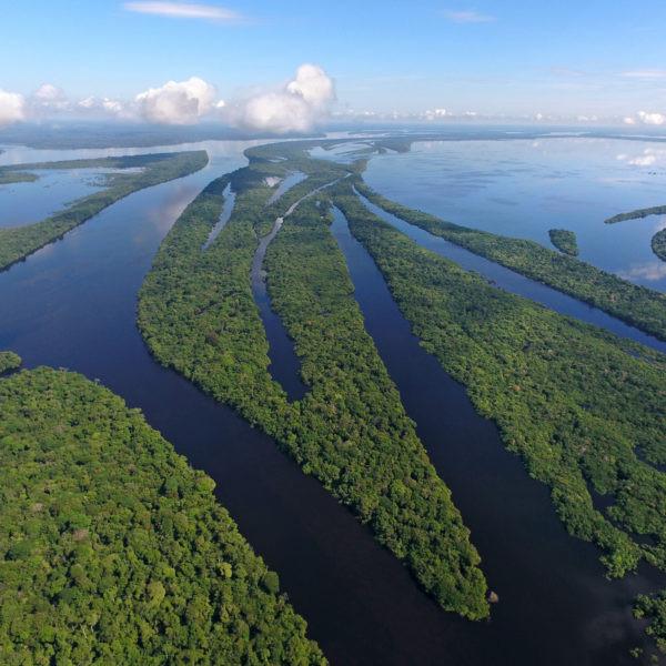 Dia da Amazônia | Os ODS favorecem um bom relacionamento entre homem e floresta