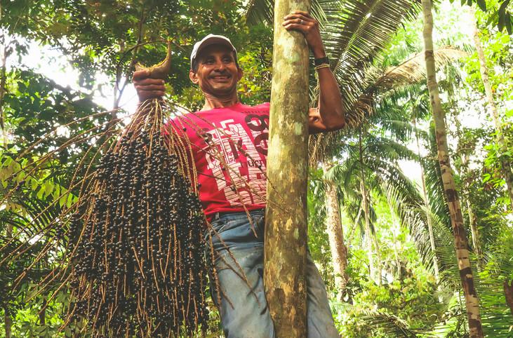 Soluciones sostenibles | Manejo del asaí en comunidades ribereñas del Amazonas