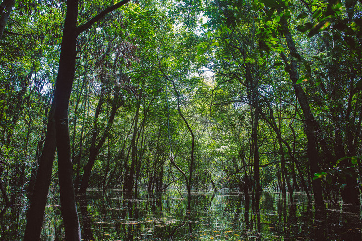 Too big to fail: a roadmap for sustainable development of the Amazon