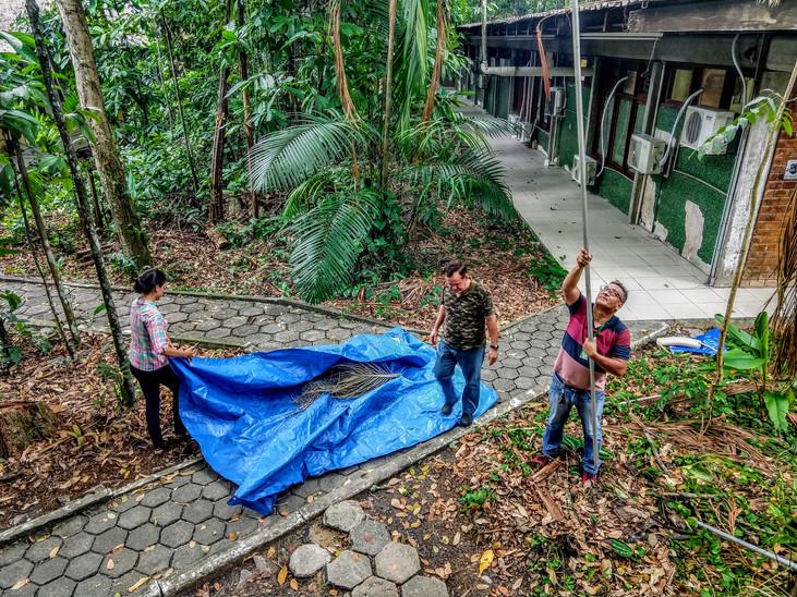 Soluciones Innovadoras | Conozca la Palmhaste, herramienta que ayuda a ribereños de la Amazonía en l