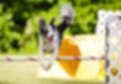 Lu Jumping 2.jpg