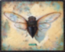 Cicada crop.jpg