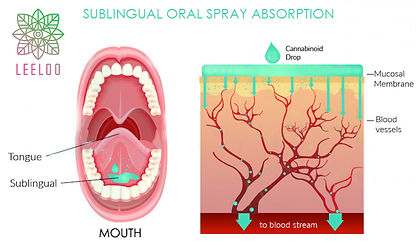What-Do-Bioavailability-and-Sublingual-M