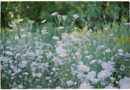 Tiny Flowers