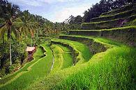 رحلات سياحية الى اندونيسيا