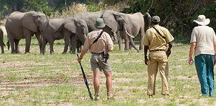 1365150557_3-Selous-elephant-walk-tanzan
