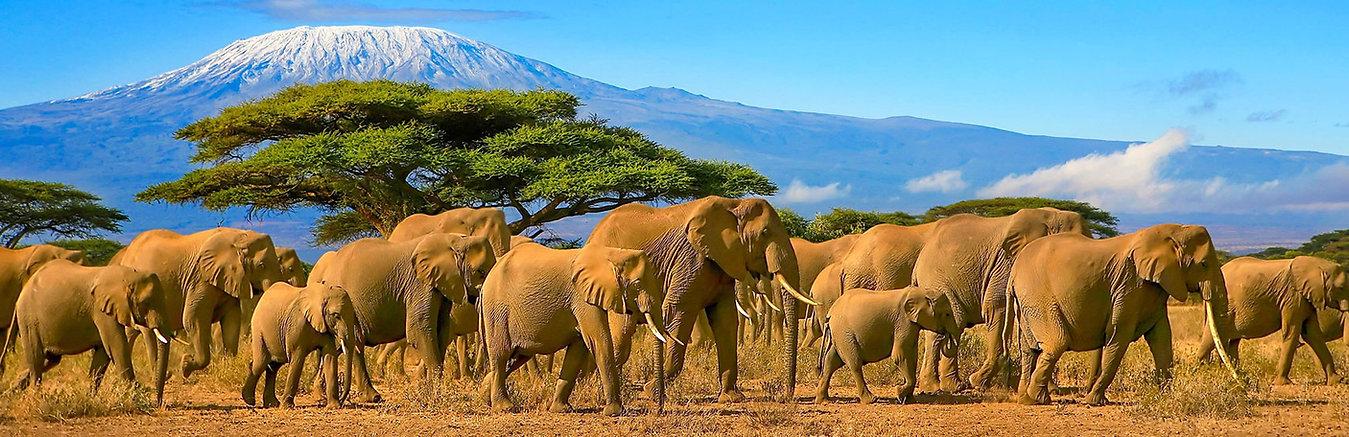 expert-travel-tips-for-a-safari-in-kenya